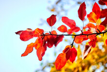 Autumn, Tree, Nature, Branch, Leaf, Leaves, Sky, Red, Ginger, Blue, Foliage, Orange, Season, Color, Plant, Green, Bright, Sun, Flower, Beauty, Spring, Summer, Water, Reflection, Sky , Clouds, Beautif
