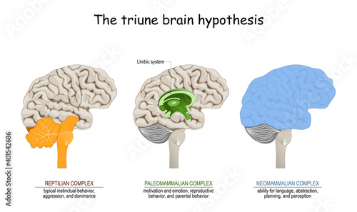Fotografija triune brain hypothesis. theory about evolution of human's brain
