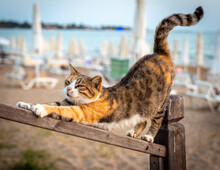 Homeless Street Cat Is Stretching Like Yoga Dog Pose On The Beach. Relaxing Pose, Selective Focus.