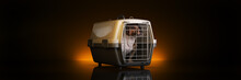 The Container For Transportation Of Animals With A Small Doggie. 3d Rendering