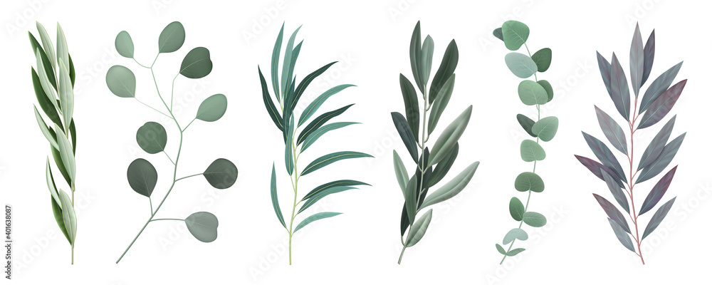 Fototapeta Realistic Eucalyptus Branches Set