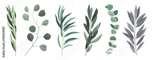 Fototapeta Realistic Eucalyptus Branches Set obraz