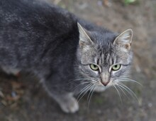 A Homeless Poor Cat Looks Sad And Asks To Eat