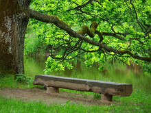Bench From Log Under Old Oak By The Riverside