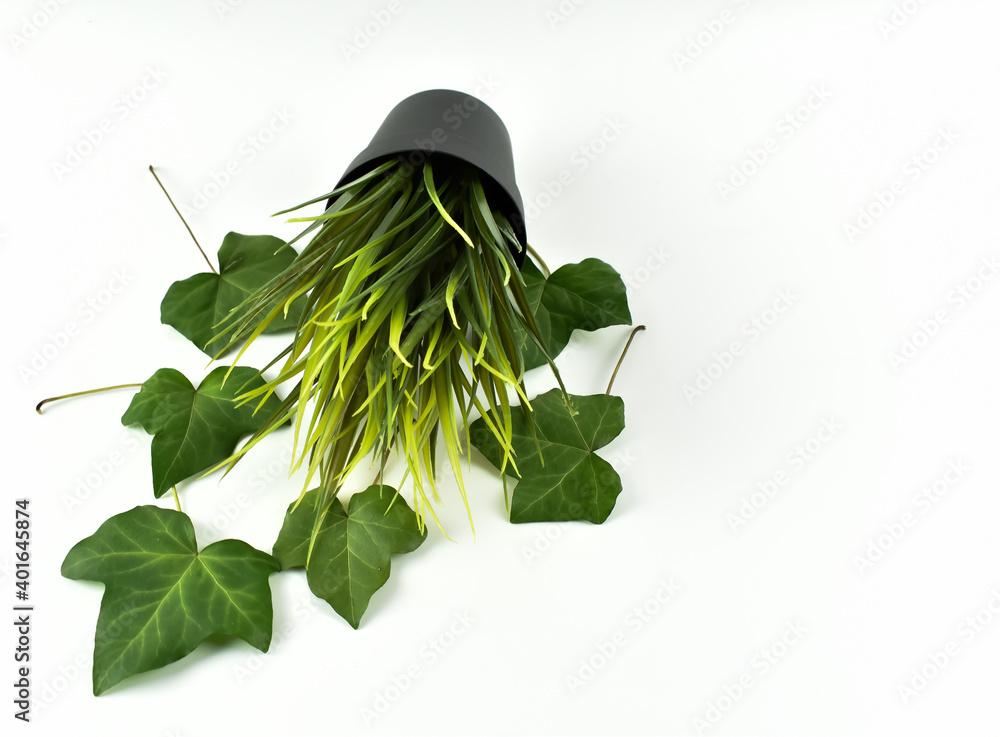 Zielona trawa i duże liście bluszczu.