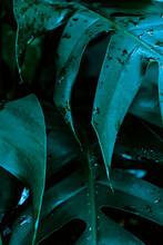 Niebieskie Liście Zbliżenie, Abstrakcyjne Naturalne Tło.
