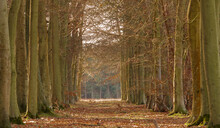 Portrait View Through An Avenue Boulevard Of Autumnal Trees With Green And Copper Hues