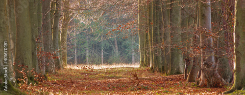 widescreen view through an avenue boulevard of autumnal trees with green and cop Fototapeta