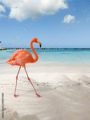 Obraz na plátne flamenco walking along the caribbean beach