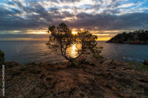 Fotografie, Obraz arbol del amanecer costa brava