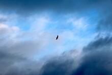 Silhouette Of Bird In Cloudy Blue Sky
