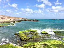 A Beautiful Shot Of A Seashore With Green Algae On The Rock