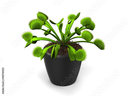 Obraz na plátně Green venus flytrap plant in a small black pot