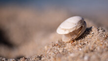 Clam Shell In The Sand On Sandy Beach. Soft Focus, Shallow Depth Of Field.
