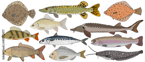 Photo Collection of river and sea fish hand drawn, isolated