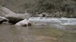A beautiful shot of flowing water in a rocky river in HD