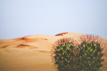 Desert In The Background With Cactus In The Foreground