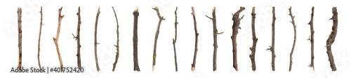 Fototapeta Set of old dry tree branches on white background. Banner design obraz