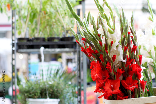 Fotografie, Tablou Flowers in the market, red gladioli. Sales, counters