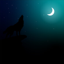 Wolf Howling At Night