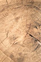 A Vertical Shot Of Rough Chopped Wood