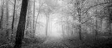 A Grayscale Shot Of A Beautiful Pathway Covered With Autumn Leaves In The Foggy Scenic Wood