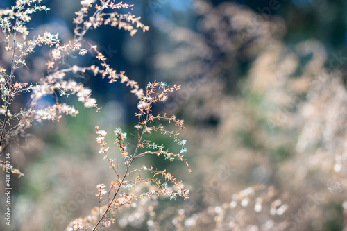 Obraz na plátně Bokeh blue sky and wildflowers in the forest with soft focused blue green backgr