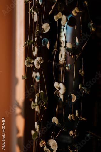 Obraz Room Plant - fototapety do salonu