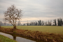 Stream Of Water In Autumn In The Countryside With Bare Trees