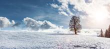 Winterlandschaft Mit Baum Und Sonnenlicht