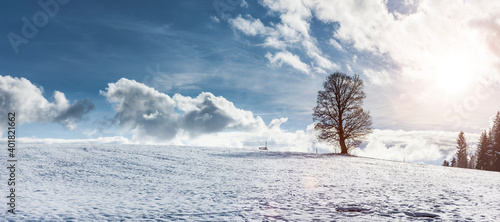 Billede på lærred Winterlandschaft mit Baum und Sonnenlicht
