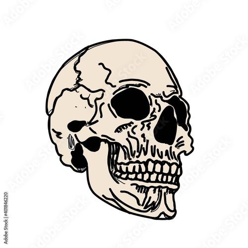 Fototapeta Skull isolated on white
