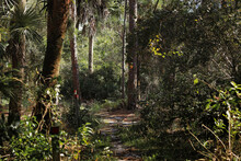 Hiking And Trail Blazing In Florida Wetlands