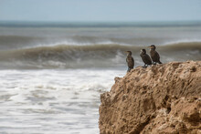 Cormorants Perched On A Rock Looking At The Sea