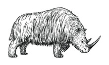 Drawing Of Woolly Rhinoceros - Hand Sketch Of Extinct Mammal