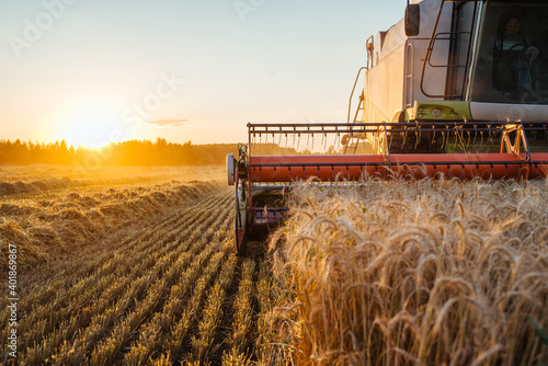 Fototapeta Combine harvester harvests ripe wheat. Ripe ears of gold field on the sunset cloudy orange sky background. . Concept of a rich harvest. Agriculture image. obraz
