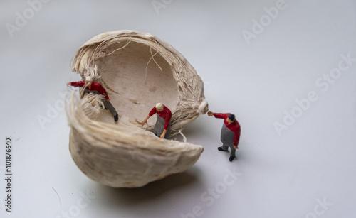 Obraz na plátně Inspection of bleached walnut shell