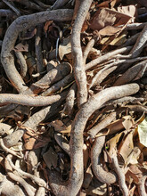 A Vertical Shot Of The Tree Roots With Dried Leaves