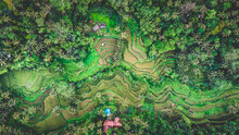 Aerial Minimalist Drone Green Jungle Tropical Wild Nature With Rice Field Terraces And Plam Tree