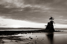 A Grayscale Shot Of A Tree On A Small Cliff In The Middle Of The Water At Siletz Bay
