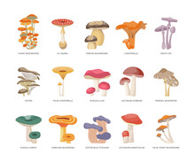 Table Of Edible And Poisonous Mushrooms Flat Vector Illustration Isolated.