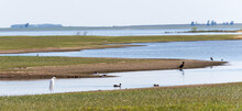 A Calm Seascape View With Various Birds On A Shore In Uruguay, Tacuarembo, San Gregorio De Polanco