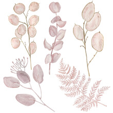Beige Lunaria And Eucalyptus Watercolor Illustration. Hand Painted Beige Fern Leaf Isolated On White Background.