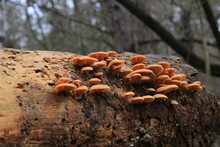 Mushrooms In The Forest, Wild Mushrooms On Wood, Fungus On Tree, Nature Forest