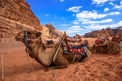 Photo Derserto Wadi Rum in Giordania, rocce e sabbia, beduini e cammelli