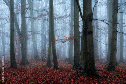 Foggy day in autumn forest