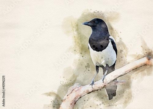 Fotografie, Obraz Magpie bird on the branch ( Pica pica ) - watercolor art