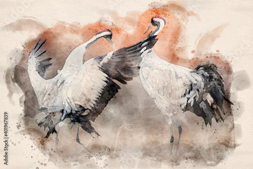 Fototapeta premium Common crane ( Grus grus ) pair mating - watercolor image