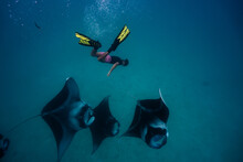 Manta Ray With Diver Snorkeler Hanifaru Maldives