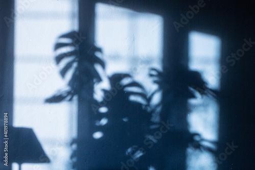 Fototapeta plant shadow obraz